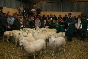 Exmoor Horn Market Day